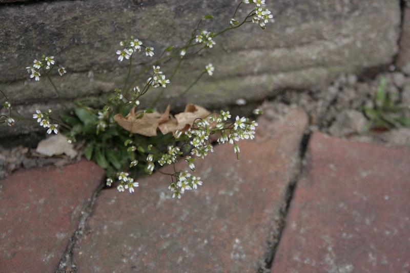 flowers&brick1