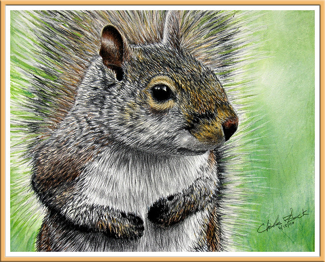 Squirrel by Charles Black