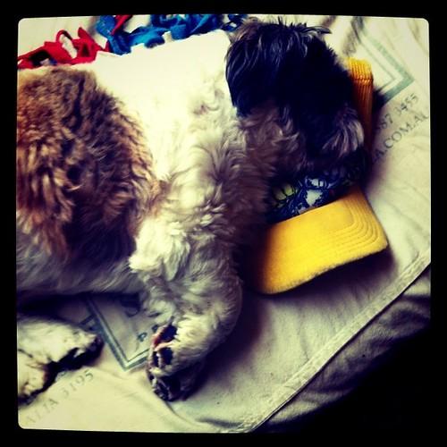My dog is sleeping .!!! by bradaus