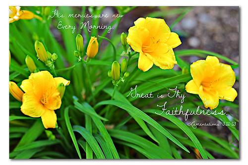 faithfulness_cw