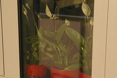 pogled s lođe na moje cvijećeu sobi