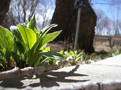Spring in Taos