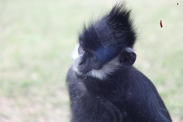 Monkey Plus Poo