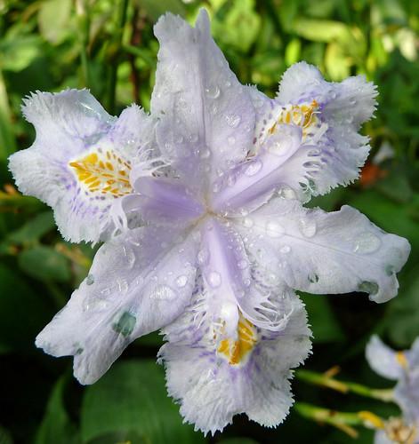Kew Gardens - April 2011