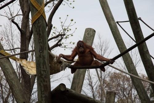 Kung-Fu Monkey