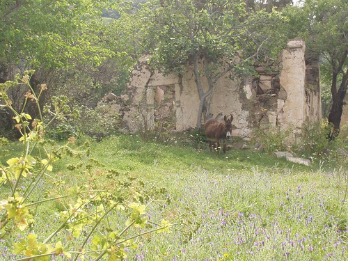 201105010089_Sandima-donkey