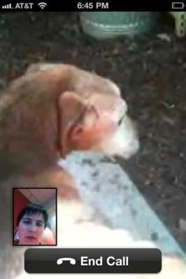 Saying Goodbye to Dog Via Skype