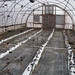 hoophouse pre-planting