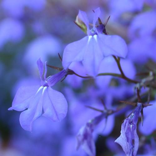 glowy blue flowers