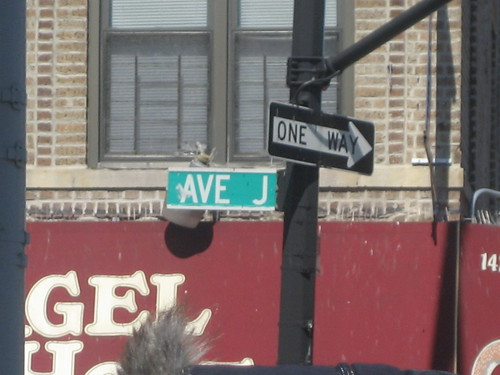 Starting at Avenue J