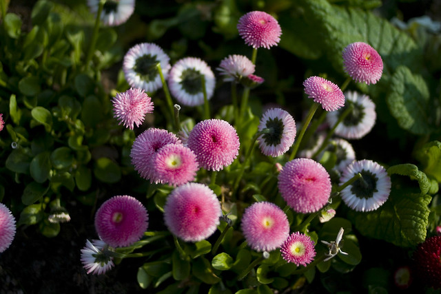 botanics_2