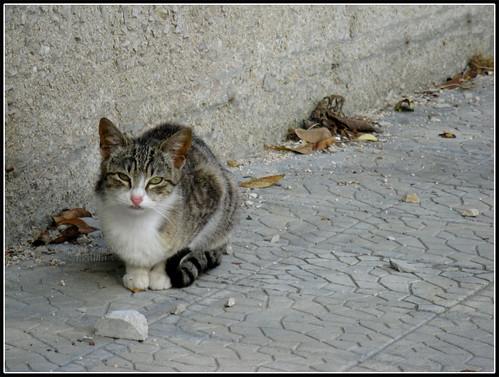 Zia, ma a me mi sebba una lumaca! by [Piccola_iena]