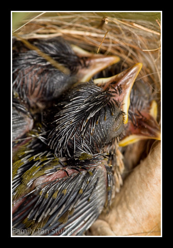 D9 Sunbird Hatchlings by Dad Bear