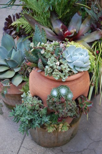 Sweet succulent containers.