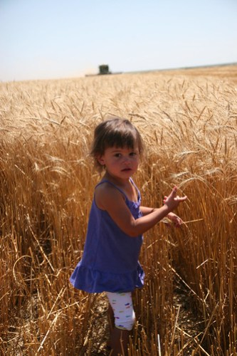 Wheat is pretty even to toddlers!