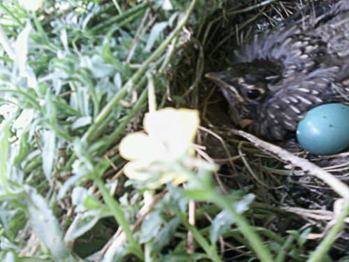 Baby Robin's Last Day by Karyn Ellis