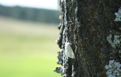 infestation-moth