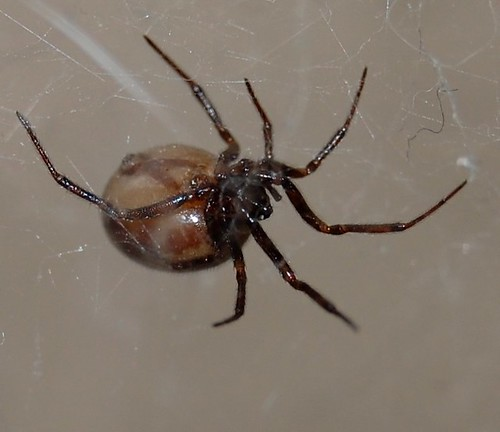 Bathroom Spider by GreyCatsidhe