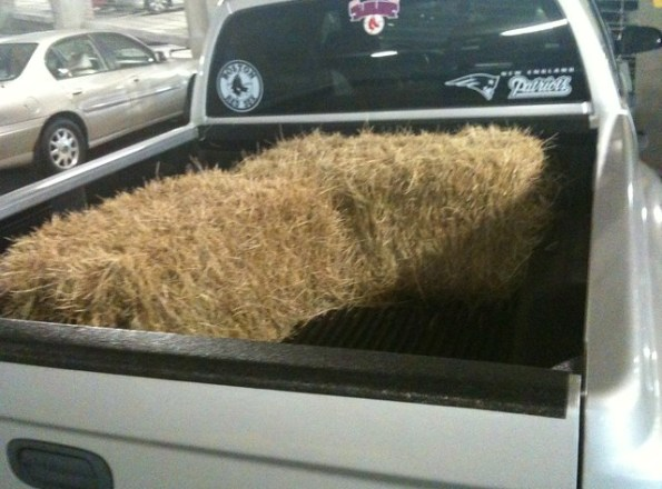 Out and About: Hay, Ya'll!