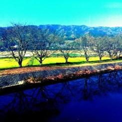 川面に映る木々
