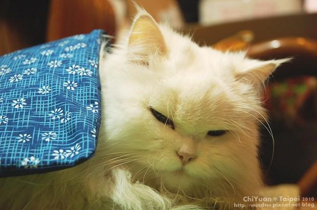 [Cat]叮叮。寒冬好眠03.jpg