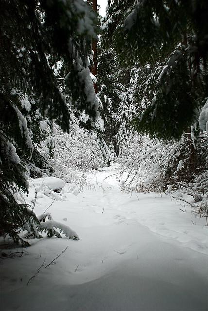 The exuberance of snow