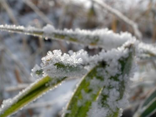 Ice Crystal III