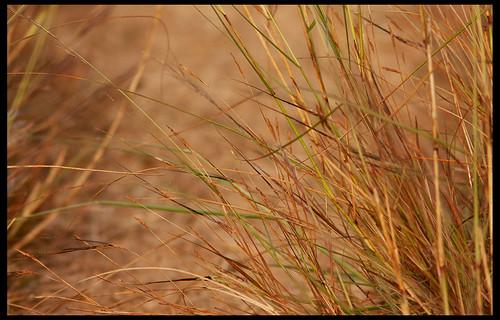 Grassland by Sushil