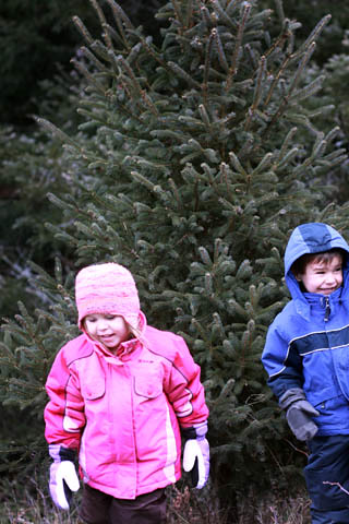 Glipses :: Christmastime Traditions