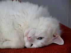 Snowflake resting