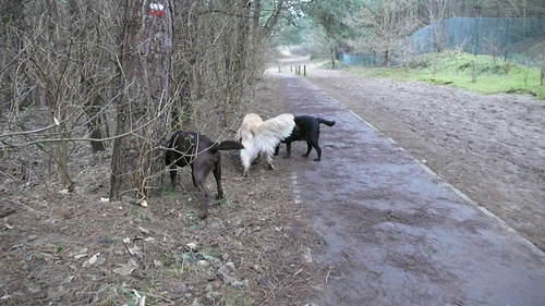 3 sniffing tails