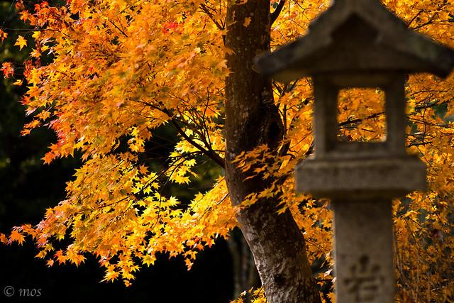 autumn color_2