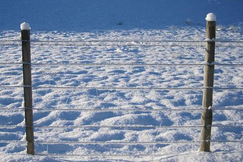 Snowy bunnets