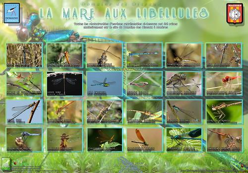 """Libellules Panneau """"Verso"""" V1-1c (Fev 2011) - Pour le Domaine des Oiseaux à Mazères"""
