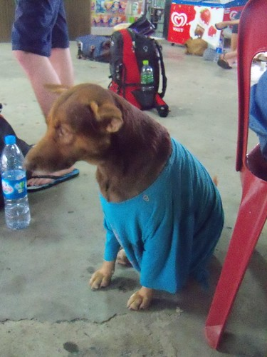 A dog in a T-shirt, of course