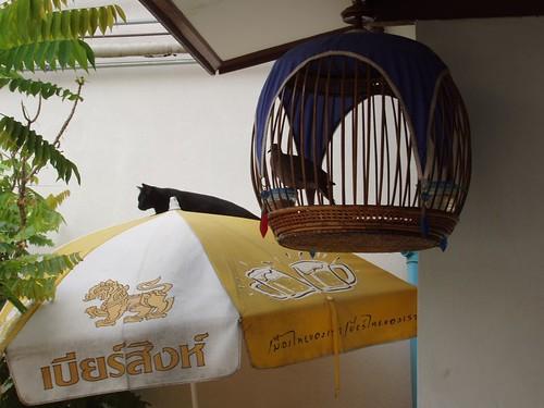 201102230029_cat-bird