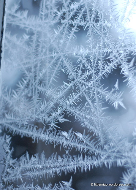 ice windows 2-2-2011 7-33-54 AM