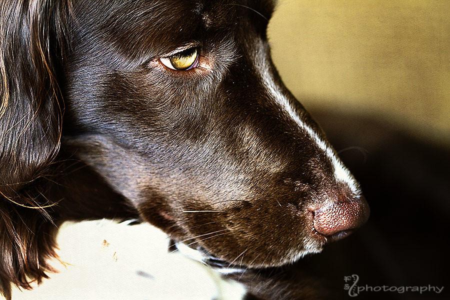 Stella in profile