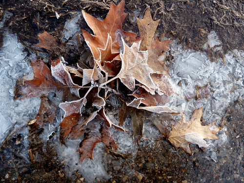 Icy oak leaf bouquet