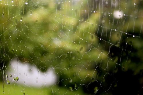 Sunday: Raindrops on cobwebs ...