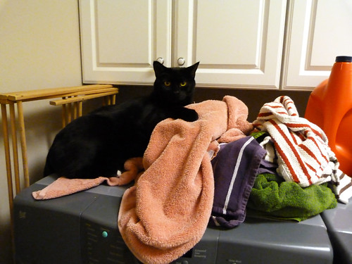 you can have my warm laundry...