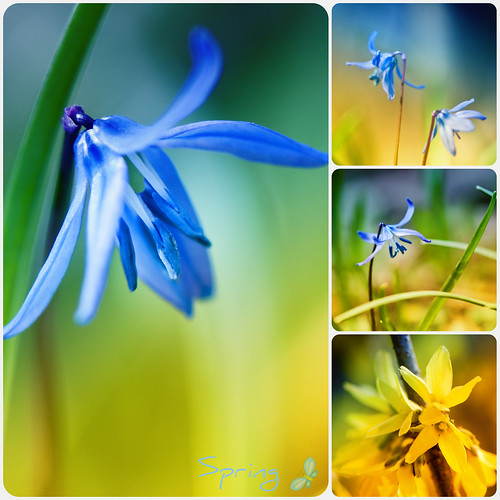 Spring Collage in blue and yellow