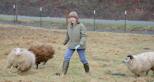 walkin the sheeps