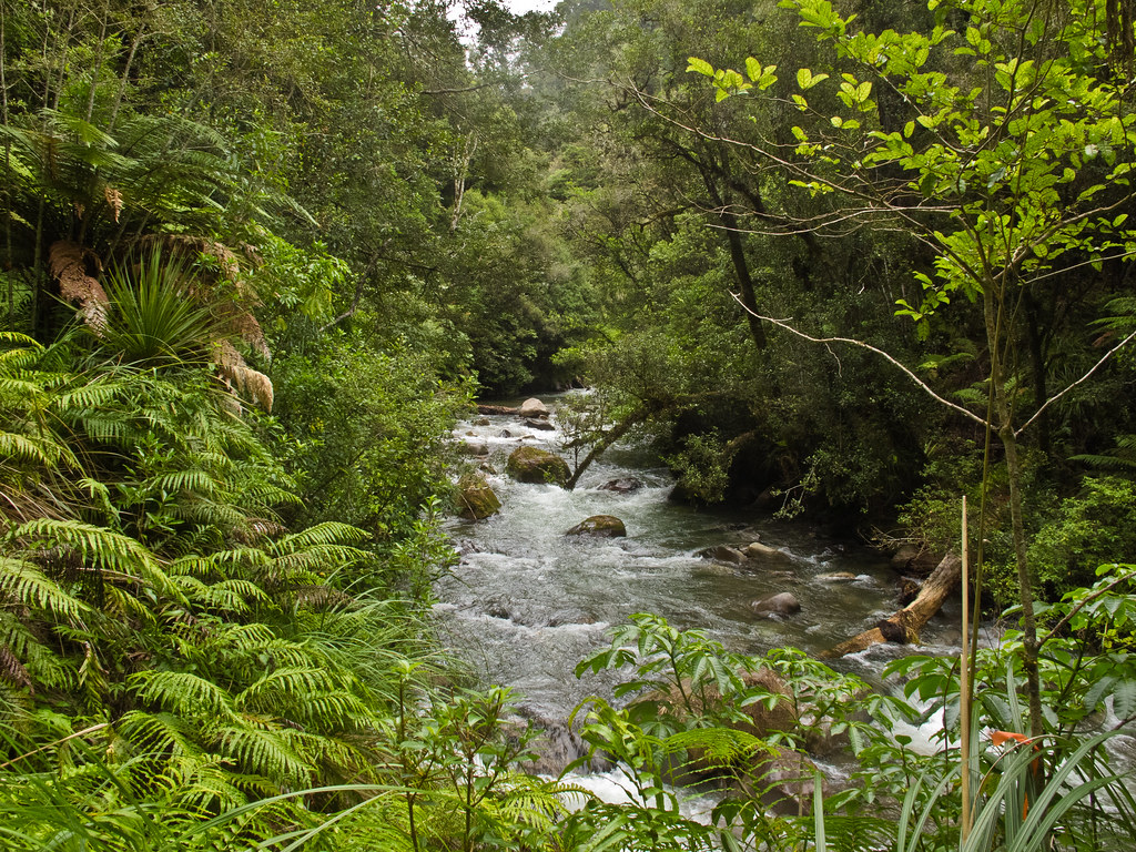 The Whirinaki River