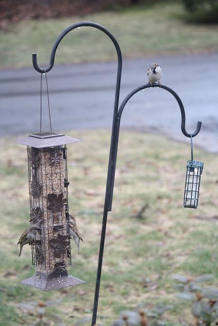 new feeder