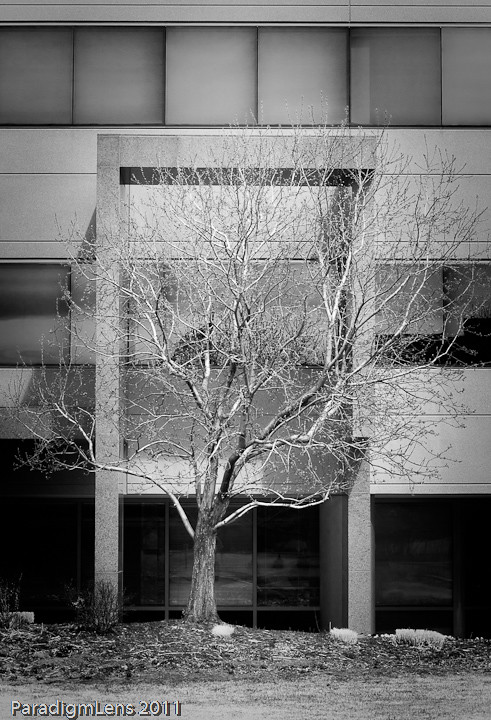 budding tree and office building