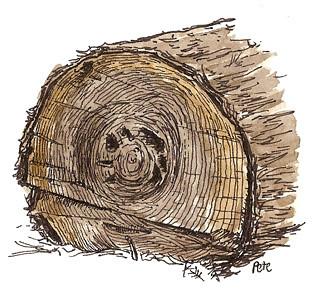 arboretum log