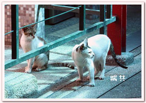平溪線貓9