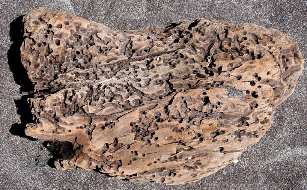 Holey driftwood