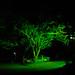 Nightfall in the Grove